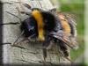 Bumblebee Kigurumi