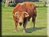 Bull Kigurumi