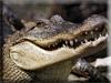 Crocodile Kigurumi