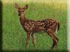 Deer Kigurumi