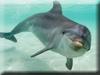 Dolphin Kigurumi