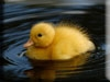 Duck Kigurumi