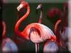 Flamingo Kigurumi