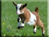 Goat Kigurumi