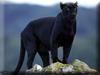 Panther Kigurumi