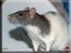 Rat Kigurumi