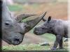 Rhino Kigurumi