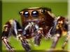Spider Kigurumi