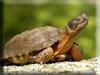 Turtle Kigurumi