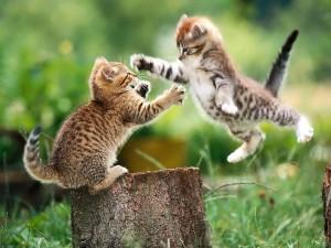 When kittehs attack!